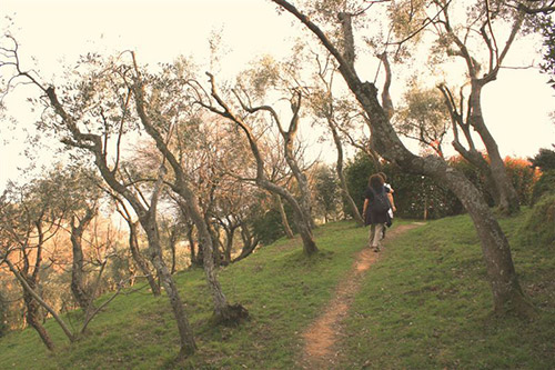 olivi-valle dei mulini