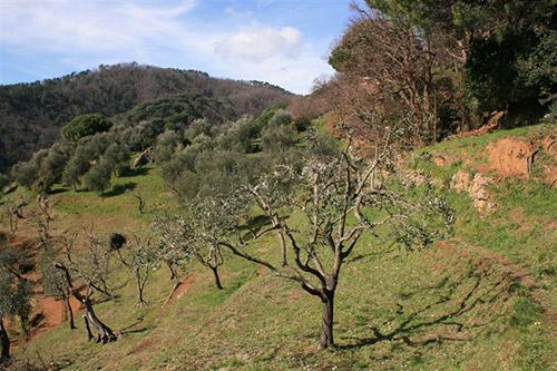 olivi valle dei mulini